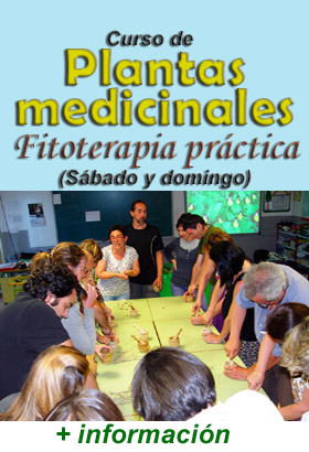 Curso de plantas medicinales